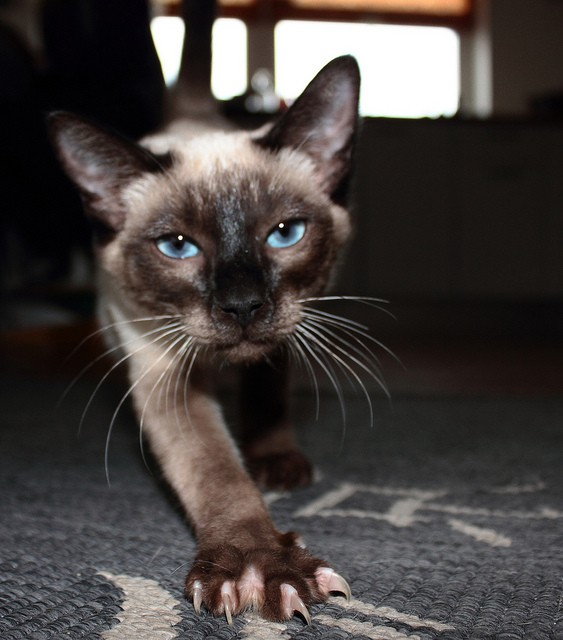 Keep Your Paws Off My Claws