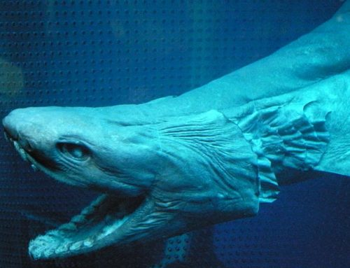 Living Fossil Horror From 80 Million Years Ago Caught