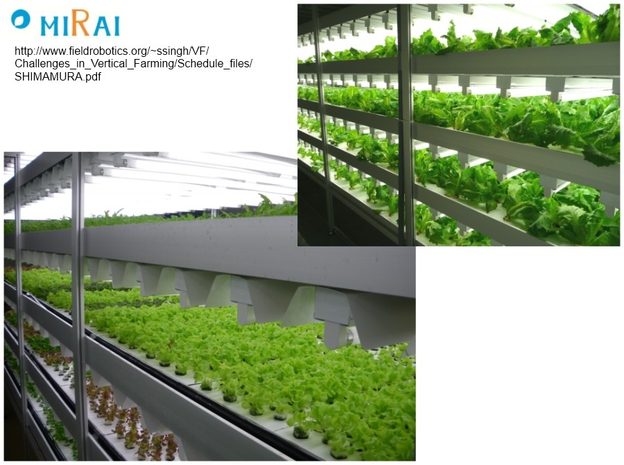 Japan's Indoor Farms