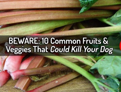 Familiar Fruits and Vegetables That Can Hurt or Kill Dogs